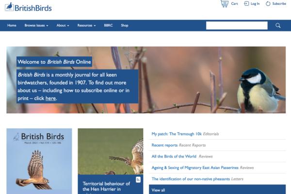 British Birds portfolio image